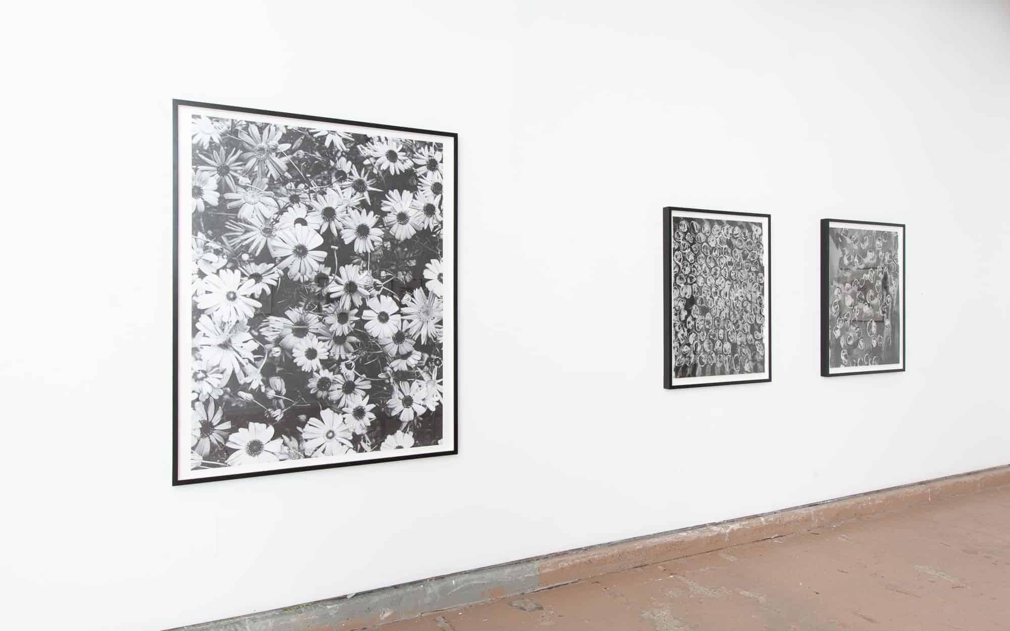 Sondra Meszaros's Camoufleurs black and white flower artwork